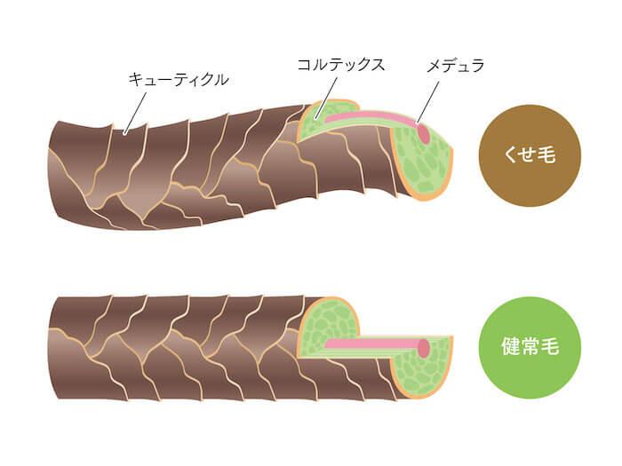 毛髪の3層構造イメージ