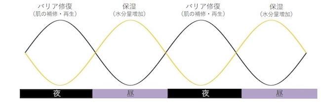 「時計遺伝子」頭皮・説明グラフ