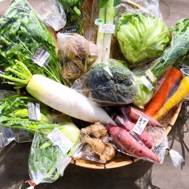藤本農園『季節の野菜セット詰め合わせ』