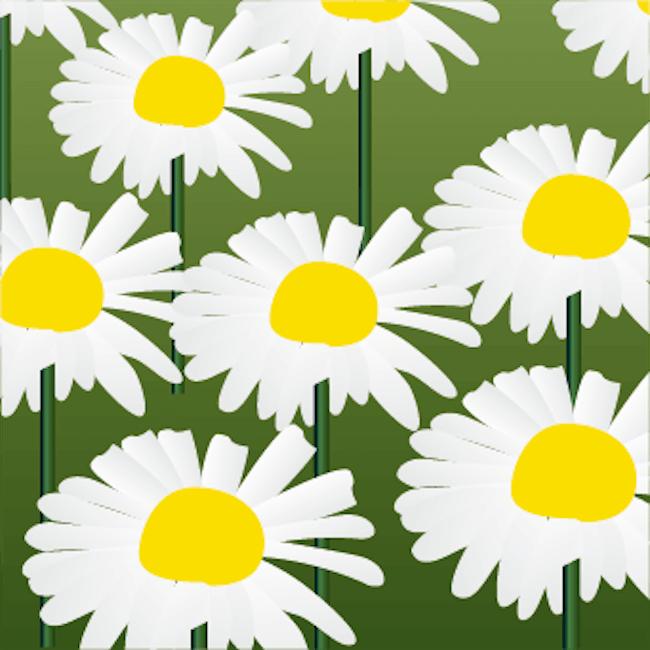 ヒナギク花エキス(保湿成分)